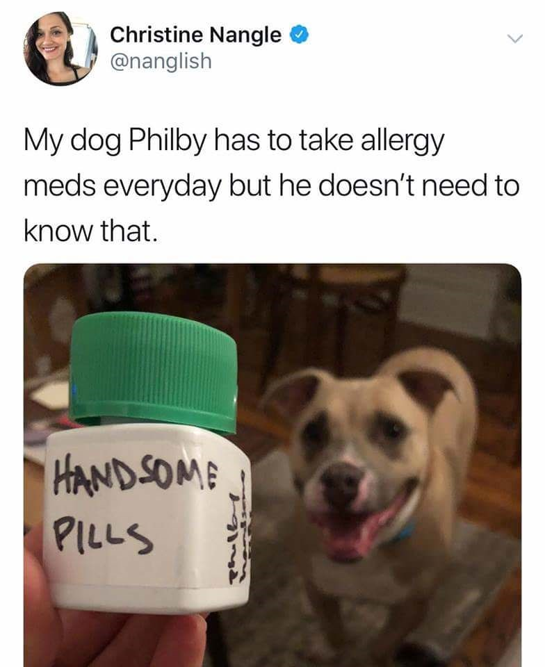 Product - Christine Nangle @nanglish My dog Philby has to take allergy meds everyday but he doesn't need to know that. HANDSOME PILLS