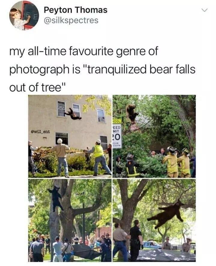 """Adaptation - Peyton Thomas @silkspectres my all-time favourite genre of photograph is """"tranquilized bear falls out of tree"""" HOOL EED MIT ewill ent how"""