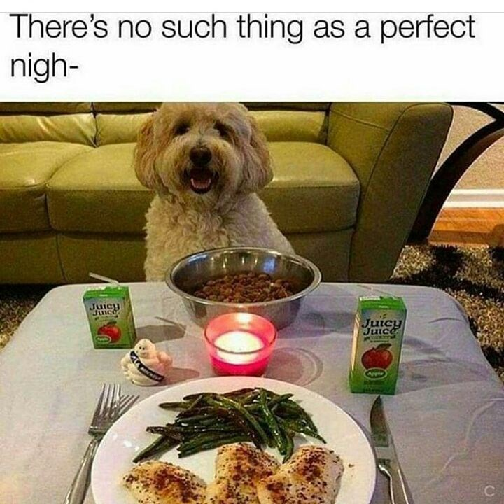 Dog - There's no such thing as a perfect nigh- Juicy Junce Juicy Juice