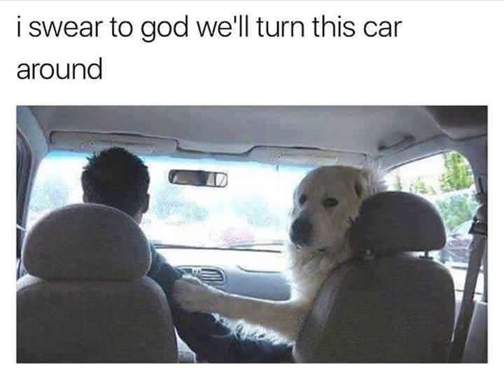 Dog - iswear to god we'll turn this car around