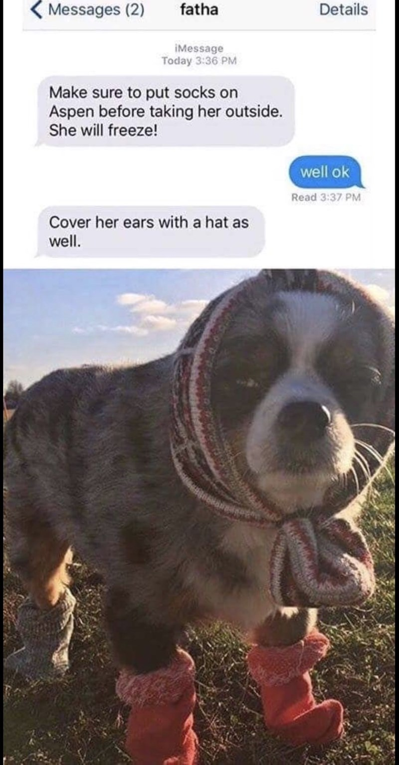 Dog breed - Messages (2) fatha Details iMessage Today 3:36 PM Make sure to put socks on Aspen before taking her outside. She will freeze! well ok Read 3:37 PM Cover her ears with a hat as well.