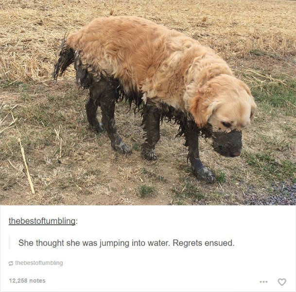Vertebrate - thebestoftumbling: She thought she was jumping into water. Regrets ensued. thebestoftumbling 12,258 notes
