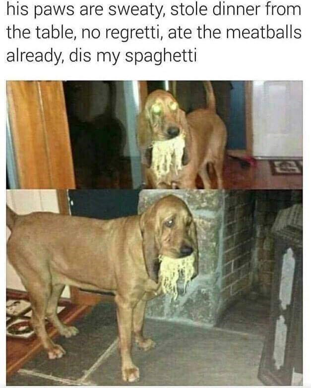 Dog - his paws are sweaty, stole dinner from the table, no regretti, ate the meatballs already, dis my spaghetti