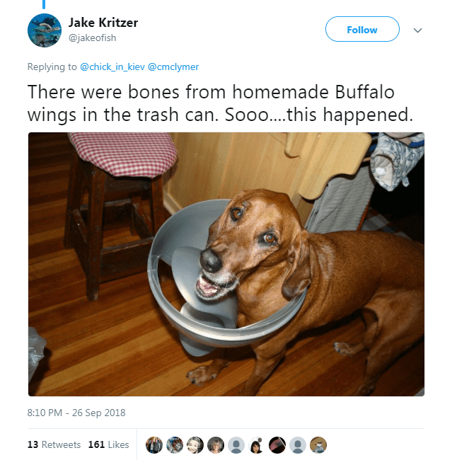 Dog - Jake Kritzer Follow @jakeofish Replying to @chick_in_kiev @cmclymer There were bones from homemade Buffalo wings in the trash can. Soo..this happened. 8:10 PM - 26 Sep 2018 13 Retweets 161 Likes