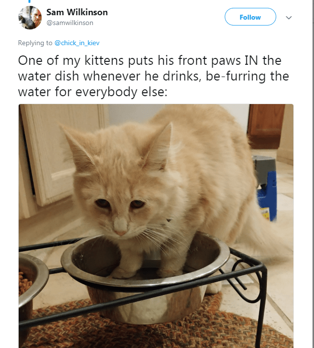 Cat - Sam Wilkinson Follow @samwilkinson Replying to@chick_in_kiev One of my kittens puts his front paws IN the water dish whenever he drinks, be-furring the water for everybody else: