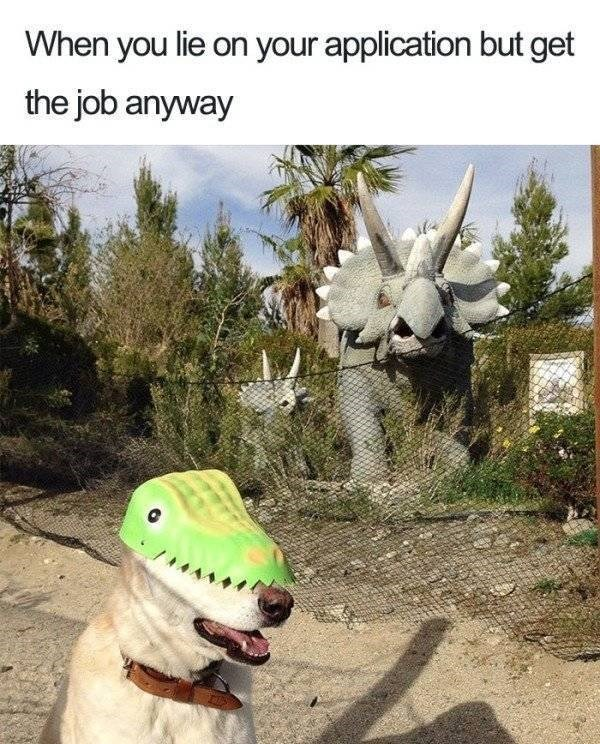 work meme about getting a job you're unqualified for with pic of dog wearing a dinosaur mask