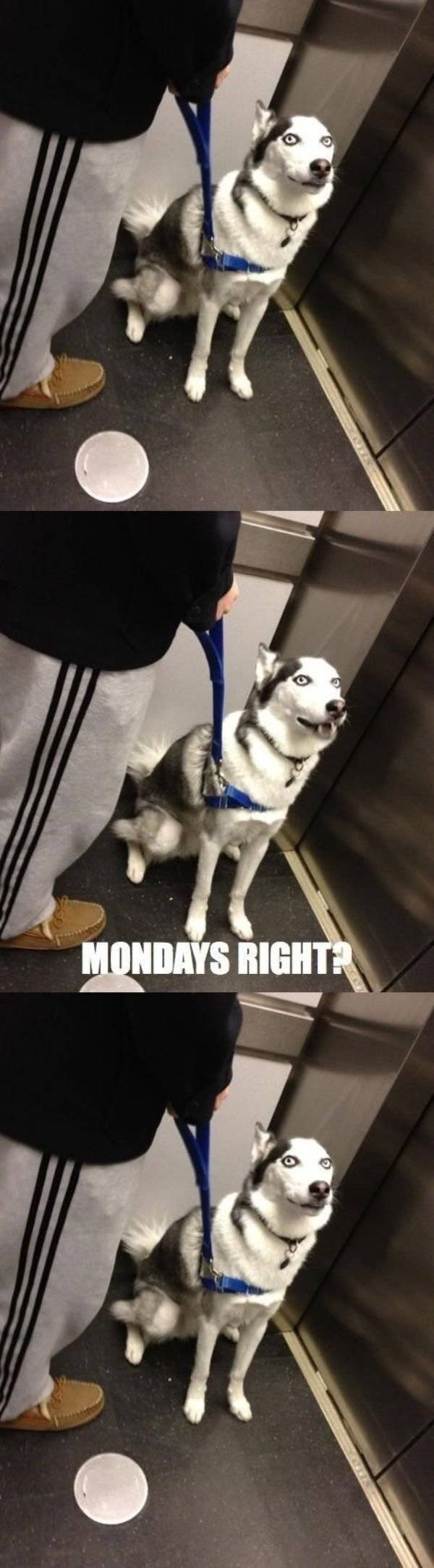 work meme about elevator small talk with a dog