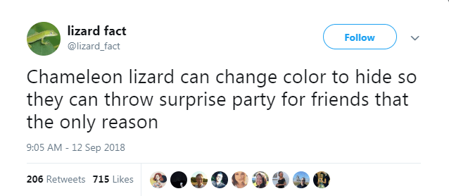 Text - lizard fact Follow @lizard_fact Chameleon lizard can change color to hide so they can throw surprise party for friends that the only reason 9:05 AM -12 Sep 2018 206 Retweets 715 Likes