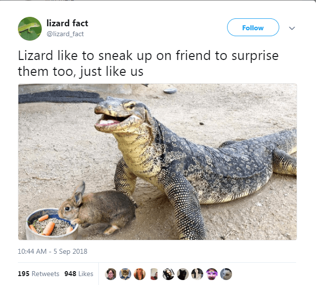 Adaptation - lizard fact Follow @lizard_fact Lizard like to sneak up on friend to surprise them too, just like us 10:44 AM -5 Sep 2018 195 Retweets 948 Likes