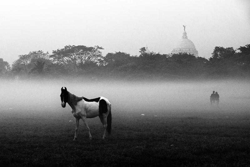animals india - Mist