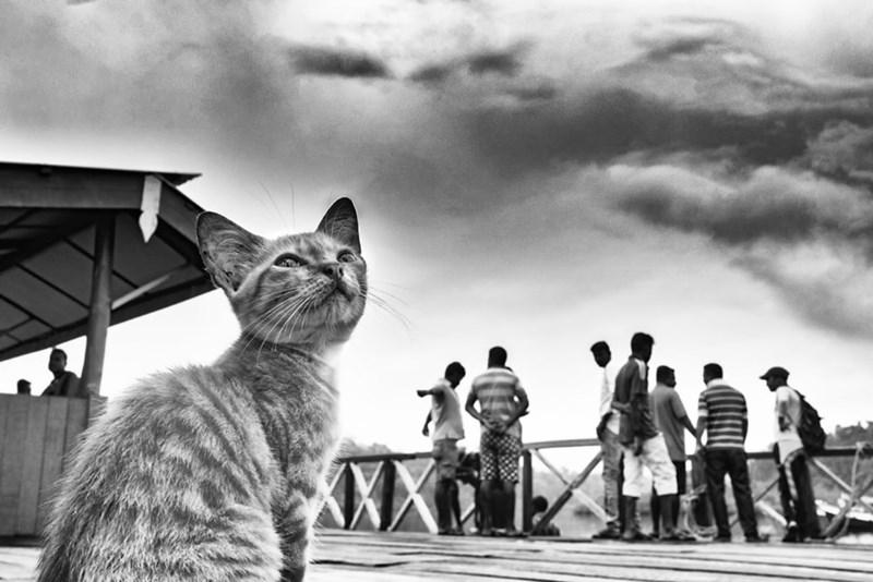 animals india - Cat