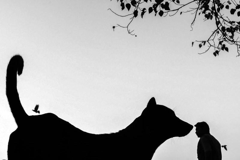 animals india - Silhouette