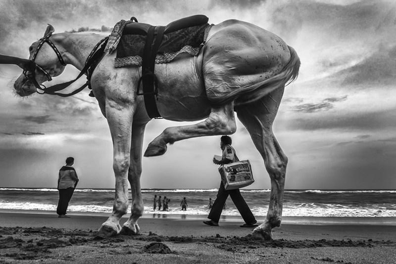 animals india - Horse - elakh