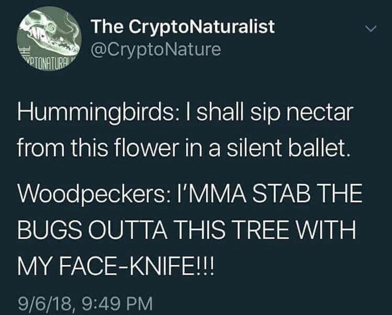 Funny bird meme, woodpeckers and hummingbirds.