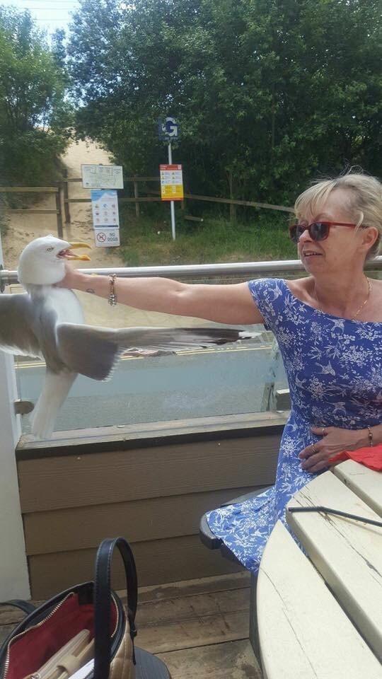 dank meme of grandma not taking sh*t from that bird
