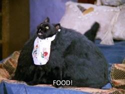 Cat - FOOD!