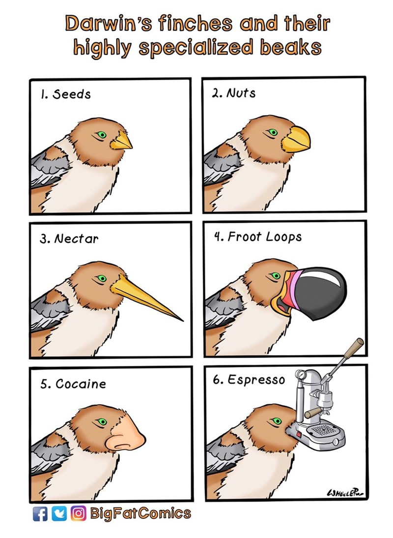Bird - Darwin's finches and their highly specialized beaks I. Seeds 2. Nuts 4. Froot Loops 3. Nectar 6. Espresso 5. Cocaine SHEELER BigFatComics