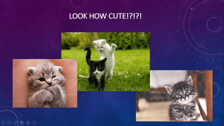 Cat - LOOK HOW CUTE!?!?!
