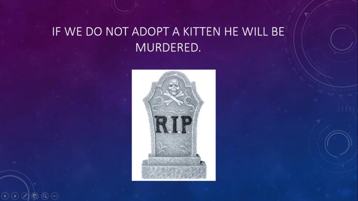 Landmark - IF WE DO NOT ADOPT A KITTEN HE WILL BE MURDERED. oT oft oot RIP
