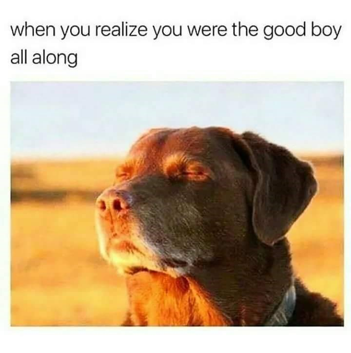 wholesome meme if a dog closing his eyes in the sunlight