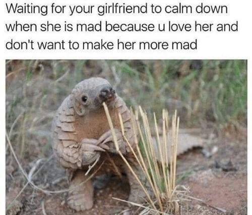 wholesome meme about a boyfriend trying to calm down his girlfriend when she's mad
