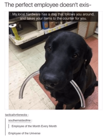 wholesome meme of black lab that wins employee of the month