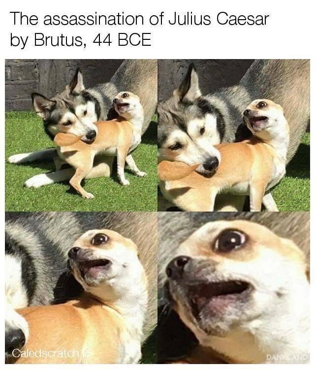Mammal - The assassination of Julius Caesar by Brutus, 44 BCE Caledscratch DANKLAND