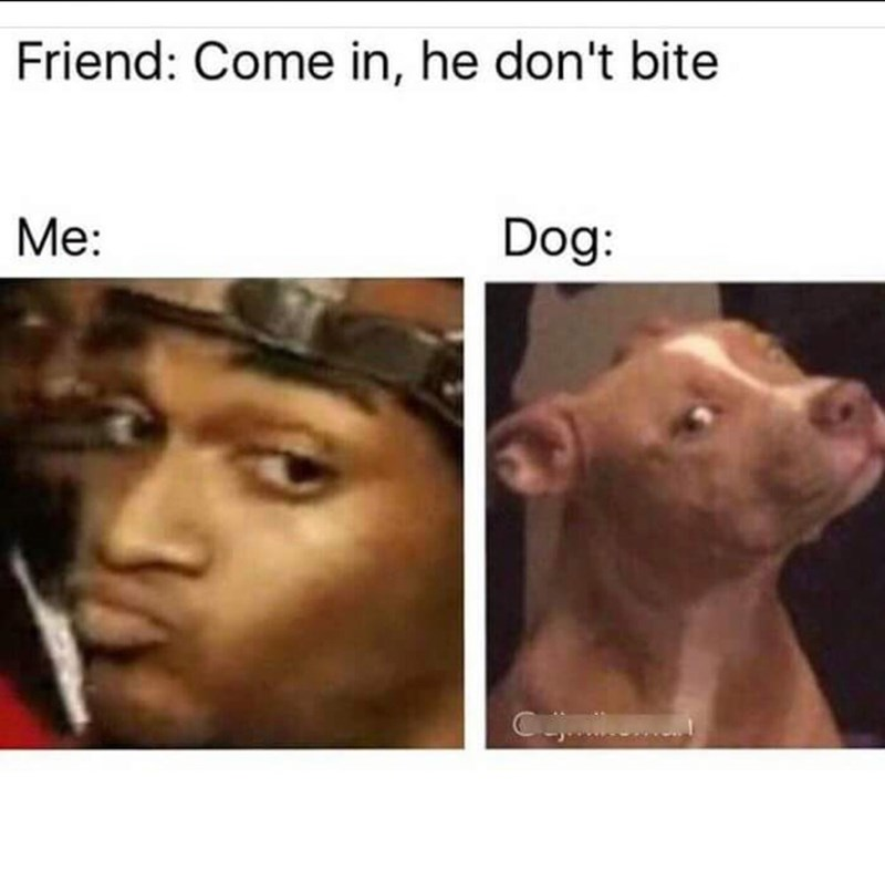Face - Friend: Come in, he don't bite Me: Dog: