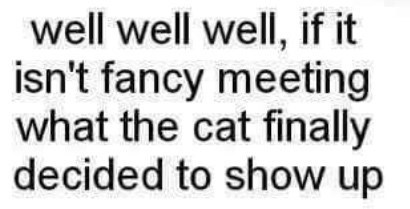 """Text that reads, """"Well well well, if it isn't fancy meeting what the cat finally decided to show up"""""""