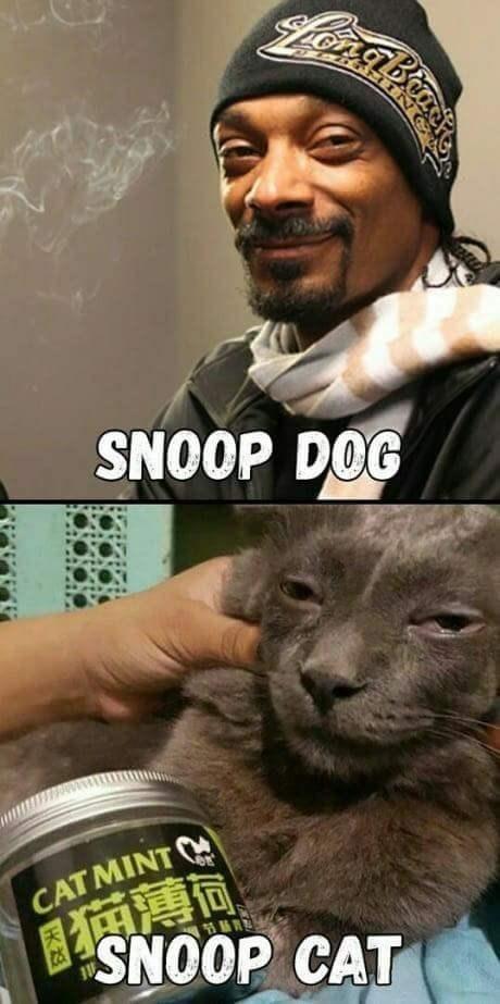 snoop dogg meme - Photo caption - NOOP DOG CAT MINT SNOOP CAT