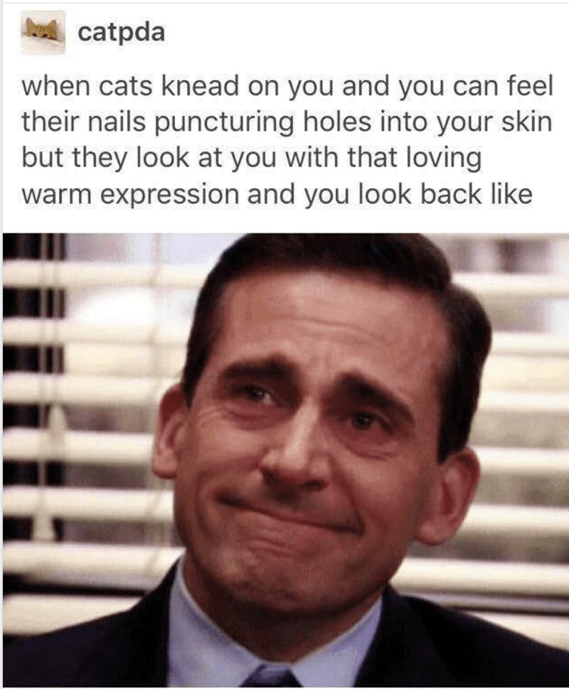 """Caption that reads, """"When cats knead on you and you can feel their nails puncturing holes into your skin but they look at you with that loving warm expression and you look back like..."""" above a pic of Michael Scott looking happy while crying"""