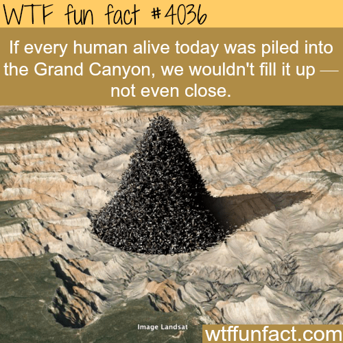 Text - WTF fun fact 4036 If every human alive today was piled into the Grand Canyon, we wouldn't fill it up not even close. Image Landsai wtffunfact.com