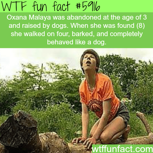 Adaptation - WTF fun fact #59% Oxana Malaya was abandoned at the age of 3 and raised by dogs. When she was found (8) she walked on four, barked, and completely behaved like a dog. wtffunfact.com