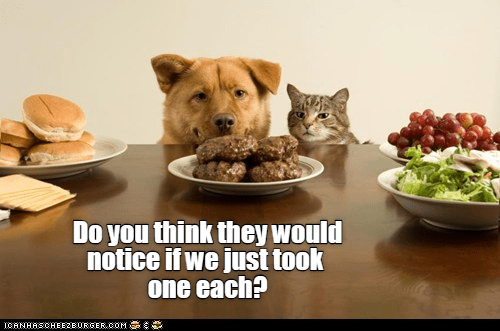 cat and dog peeking over table looking at a plate of food