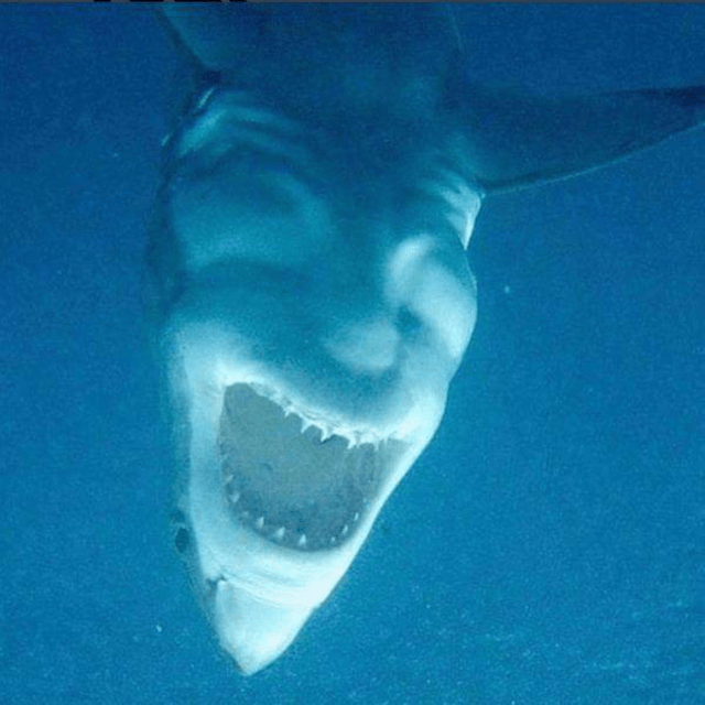 picture of shark taken from bellow that looks like a demon's head