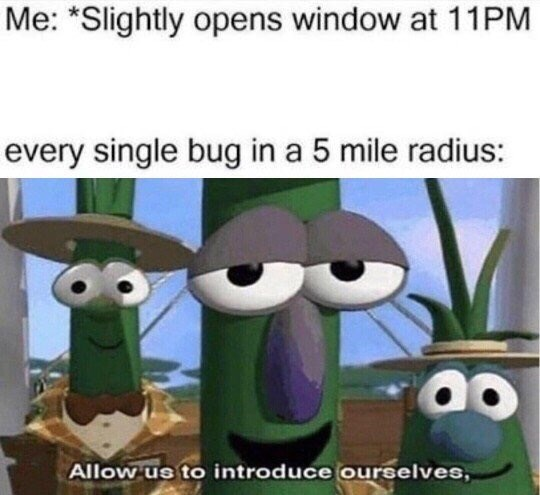 """meme - Cartoon - Me: """"Slightly opens window at 11PM every single bug in a 5 mile radius: Allow us to introduce ourselves,"""