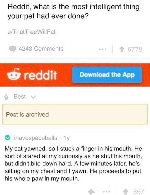 meme - Text - Reddit, what is the most intelligent thing your pet had ever done? u/ThatTreeWillFall 4243 Comments 6778 reddit Download the App Best Post is archived ihavespaceballs 1y My cat yawned, so I stuck a finger in his mouth. He sort of stared at my curiously as he shut his mouth, but didn't bite down hard. A few minutes later, he's sitting on my chest and I yawn. He proceeds to put his whole paw in my mouth t657