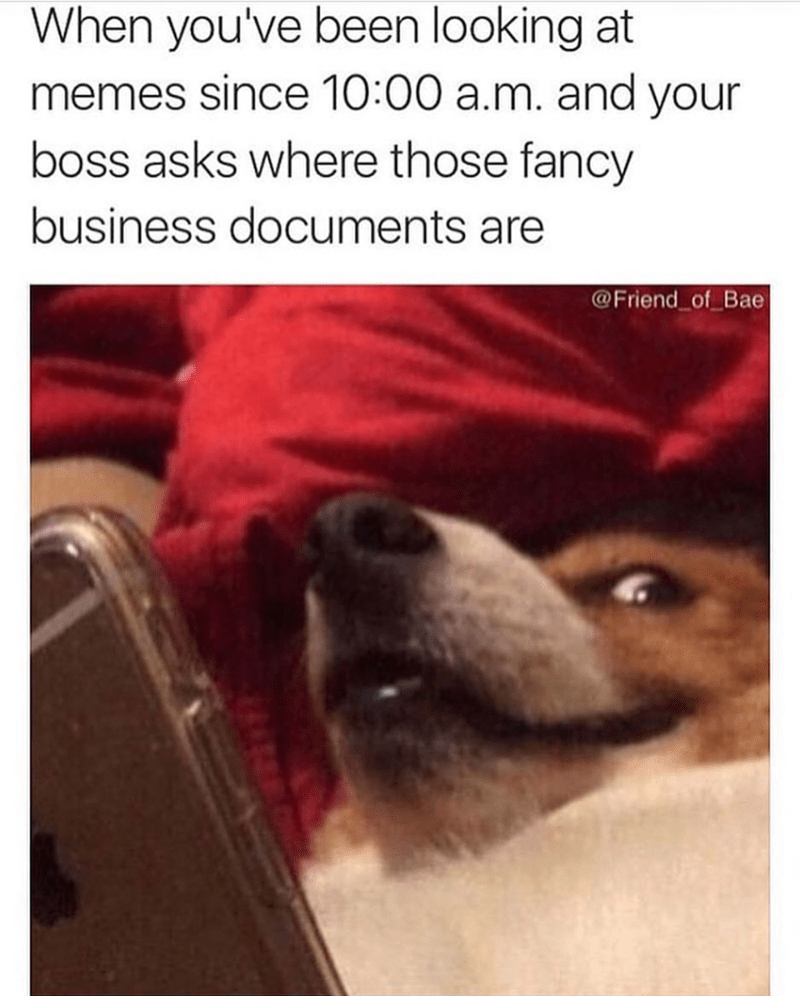 "Caption that reads, ""When you've been looking at memes since 10am and your boss asks where those fancy business documents are"" above a pic of a corgi looking up from a phone looking nervous"
