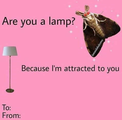Insect - Are you a lamp? Because I'm attracted to you To: From: loveandahotesome