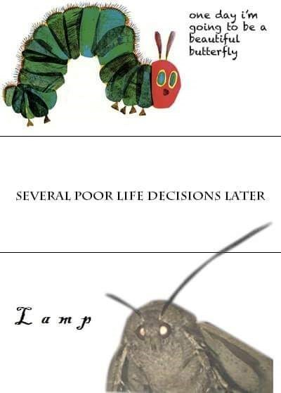 "Eric Carl's caterpillar with the caption, ""One day I'm going to be a beautiful butterfly"" above text that reads, ""Several poor life decisions later"" above a pic of a moth saying, ""lamp"""