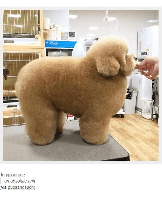 Dog - doggosource: an absolute unit (via pupsandsuch)