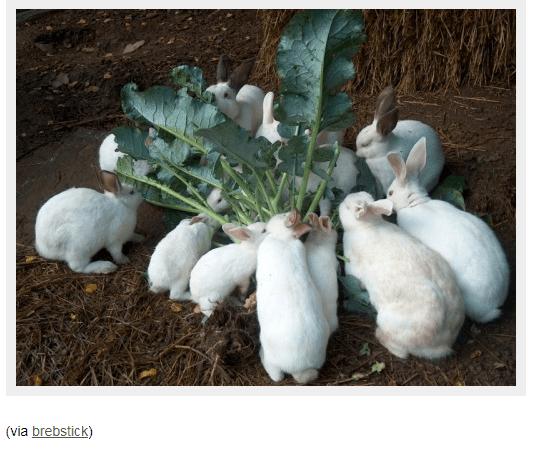 Hare - (via brebstick)