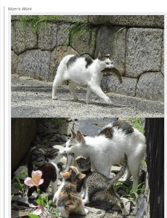 Mammal - Mom's Work