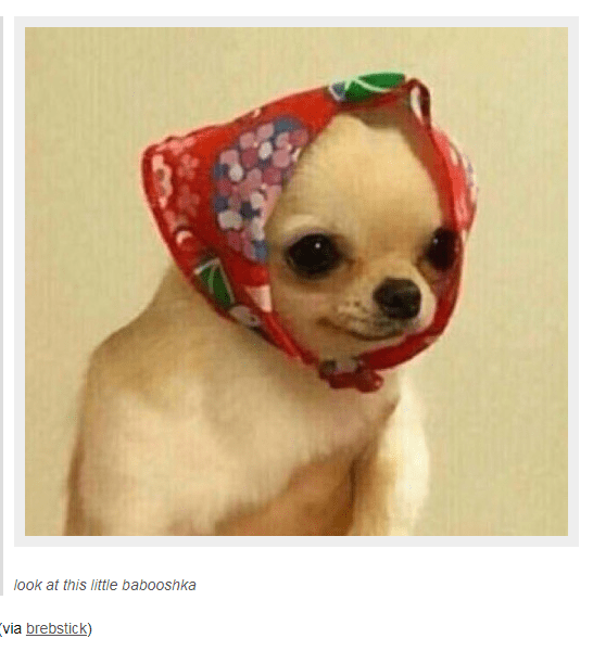 Dog - look at this little babooshka (via brebstick)