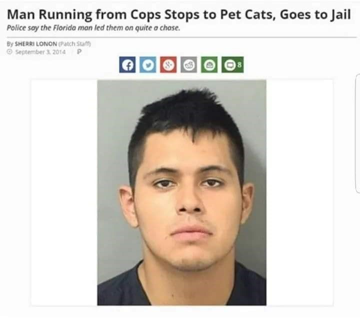 headline about Florida man petting cats while running from police