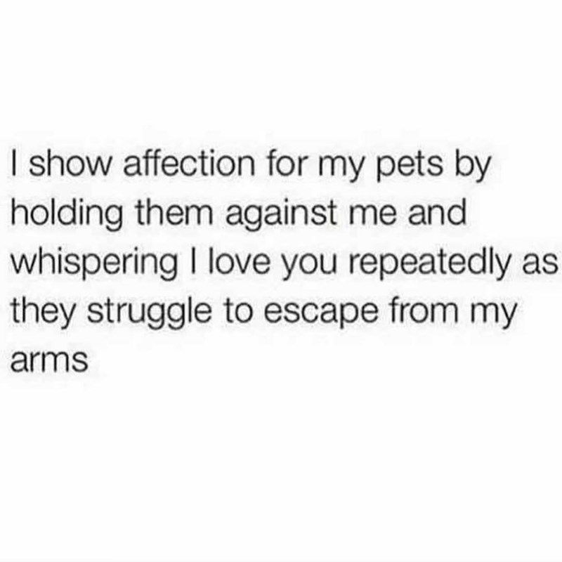 """Text that reads, """"I show affection for my pets by holding them against me and whispering I love you repeatedly as they struggle to escape from my arms"""""""