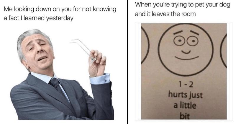 Funny random memes, funny memes, dank memes, relatable memes, funny tweets, animal memes, dog memes.