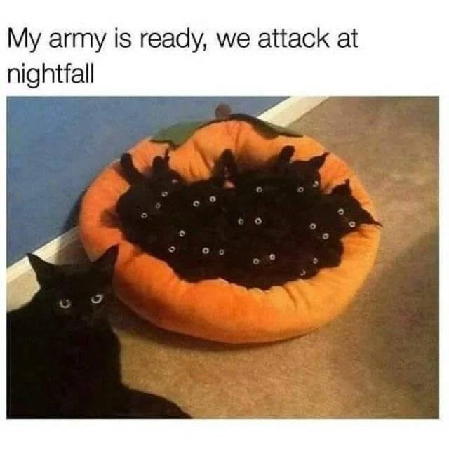 Orange - My army is ready, we attack at nightfall