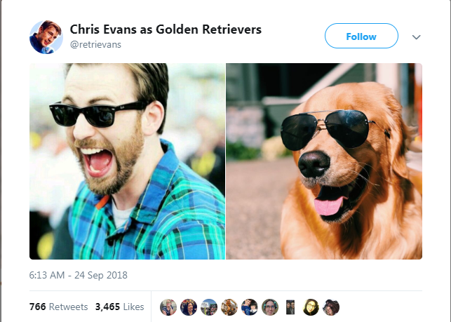 Eyewear - Chris Evans as Golden Retrievers Follow @retrievans 6:13 AM - 24 Sep 2018 766 Retweets Likes