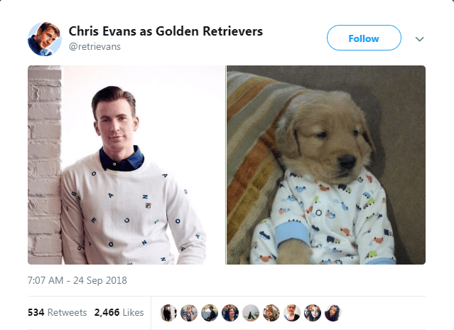 Canidae - Chris Evans as Golden Retrievers Follow @retrievans 7:07 AM 24 Sep 2018 534 Retweets 2,466 Likes
